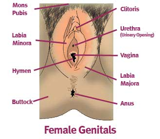 femalegenitals